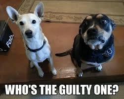 Top-Animal-Funny-Memes-018.jpg via Relatably.com