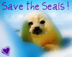 Image result for seals