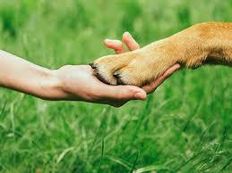 5 of the World's Rarest <b>Dog</b> Breeds   Petplan