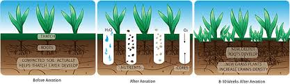 Image result for aerating