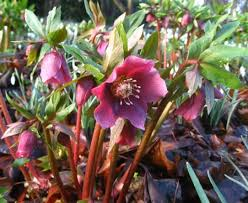 25 Full Shade Plants that Will Look Great in Your Yard - Mike's ...