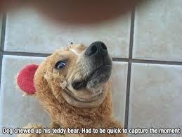 Funny-puppy-memes-tumblr (7) - EWallpapersonline via Relatably.com