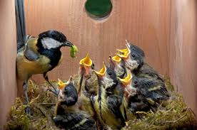 Image result for build a nest box