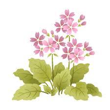 תוצאת תמונה עבור תמונה של פרח סגור