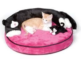 Decoração da casa e animais de estimação