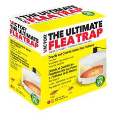 <b>Insect trap Insect Traps</b> & Repellents at Lowes.com