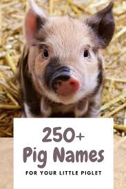 250+ Pet <b>Pig</b> Names for Your Little Piglet (From Albert to Wally ...