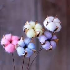 <b>10pcs Colorful</b> Cotton Dried Flowers Wedding Kapok Bouquet ...