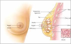 Ciri ciri kanker payudara
