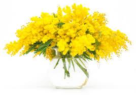 Risultati immagini per mimose 8 marzo
