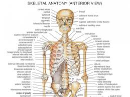 glands in the digestive system anatomy essay on the digestive all the bones in the skeletal system