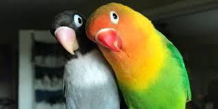 <b>Bird love</b> story goes viral - Insider