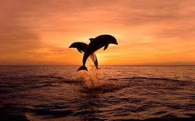 Αποτέλεσμα εικόνας για δελφίνια