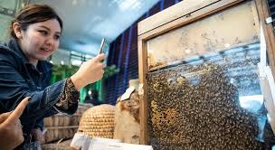 On World <b>Bee</b> day, human activity blamed for falling pollinator ...