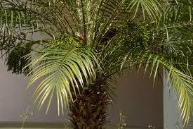 jpg patio palm trees water