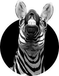 <b>Black & White</b> Zebra - Helping People & Organizations Succeed