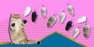 35 крутых товаров для кошек и их владельцев - Лайфхакер