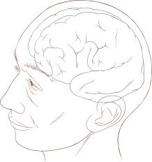 file human head and brain diagram svg   wikimedia commonsfile human head and brain diagram svg
