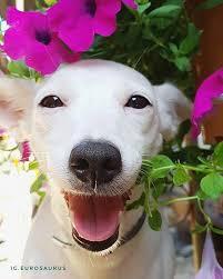 Welcome to <b>Euro</b> Gallery | I love dogs, Dogs, <b>Cute</b>