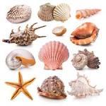 Image result for shells