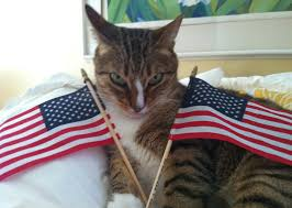 Image result for cats dressed as george washington