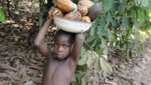 Αποτέλεσμα εικόνας για παιδικη εργασια ΚΑΚΑΟ