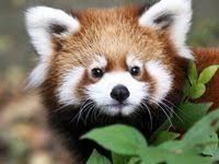 460 <b>Cute Fox</b> ideas | fox, <b>cute fox</b>, animals beautiful