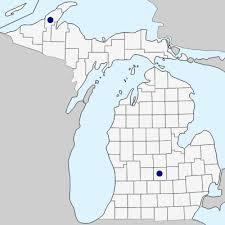 Campanula glomerata - Michigan Flora