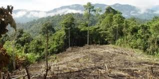 Resultado de imagen para Peru + FAO