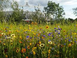 Small Picture Wildflower meadows in Londons 2012 Queen Elizabeth Olympic Park