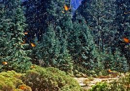 Bloque VI. Área protegida (bosque de la mariposa monarca) Images?q=tbn:ANd9GcQWvE1MdNqL-conj4IAAEObgFkDW7vONo4Xr6jcAd1jtj7SqfZV