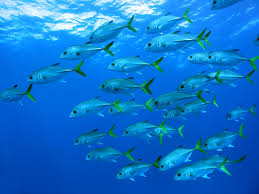 Image result for fish school