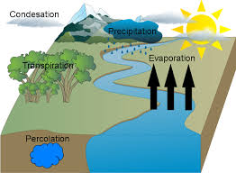 jenny nguyen water cycle final   usaus h ojenny nguyen water cycle final vector edit  middot  vector edit vector edit