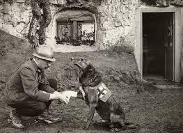 Résultats de recherche d'images pour «red cross 1917»
