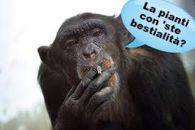 Risultati immagini per scimmia disperata