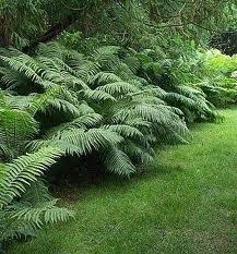 Image result for fern gardens
