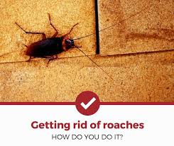 How to Get Rid of <b>Cockroaches</b> (Complete Guide)