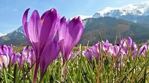 Znalezione obrazy dla zapytania wiosna w górach