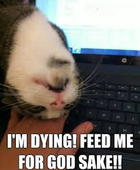 I'm dying - Feed me for God sake - Memes Comix Funny Pix via Relatably.com