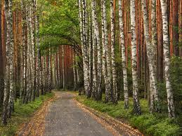 Stobrawa Landscape Park