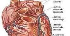 señales de un corazón enfermo