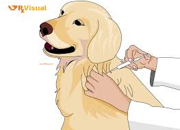 rx visual rabies home remedy treatment medicine cure signs dog vaccination vaccine rabies veterinarian bite scratch signs symptoms causes