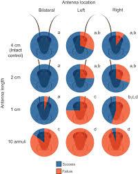 Phd thesis antennas  amp  Proposal and dissertation help dissertation