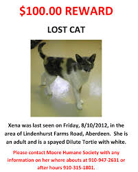 missing cat flyer template best template design images missing cat flyer template