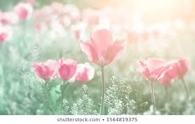 Bright <b>Flowers Field</b> Images, Stock Photos & Vectors | Shutterstock
