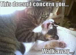 Aggressive Cat | Animals Memes | Heartstring | Pinterest | Cats ... via Relatably.com