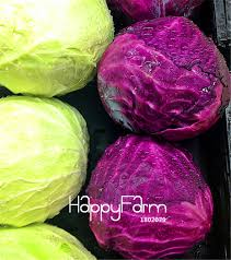 <b>100 Pieces/Lot</b> Best Selling!Early Red Acre Heirloom Cabbage ...