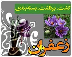 photo اموزش پرورش زعفران در اپارتمان کسب و کاری بکر