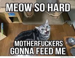 Cat memes Feed me!... | Funny! | Pinterest | Cat Memes, Meme and Cat via Relatably.com