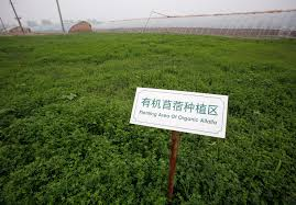scientists think gmo crops help us deal climate change a sign can be seen indicating an area for growing organic alfalfa in front of greenhouses at an organic farm located on the outskirts of beijing 20